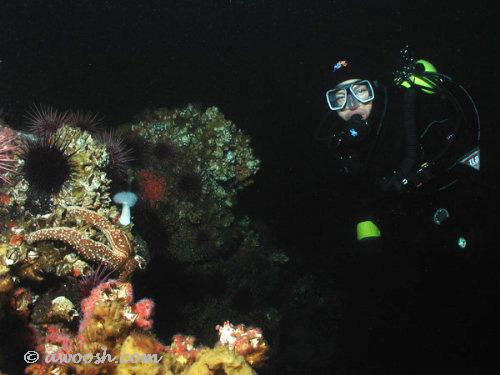 DG on The Reef