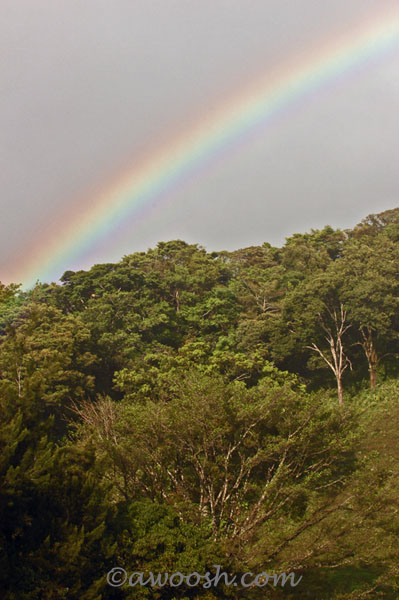 Rainbow over Rain Forest