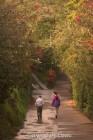 Flora walk