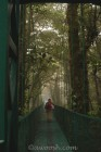 Suspension Bridge in Cloud Forest Canopy