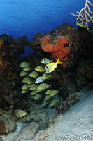 Mixed Schooling Fish