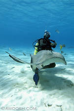 Highlight for Album: Grand Cayman 2009