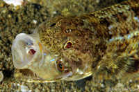 Lizardfish and Lunch