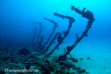 Highlight for Album: Maria La Gorda, Cuba - Underwater - December 2004