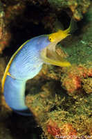 Blue Ribbon Eel 2